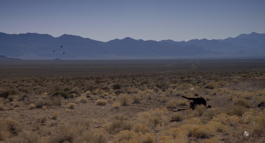 Area 51 Nevada Usa De Annabelle Amoros 2017 Unifrance
