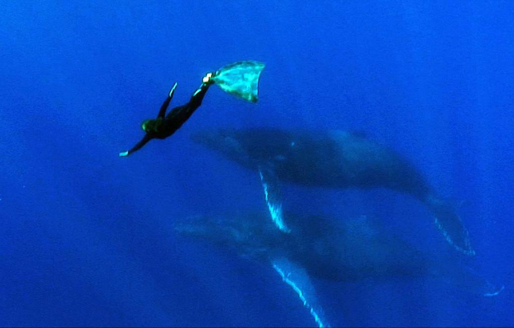 La Baleine et Moi