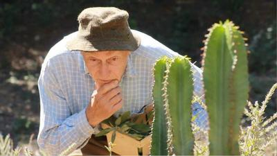 Cactus vinaigrette